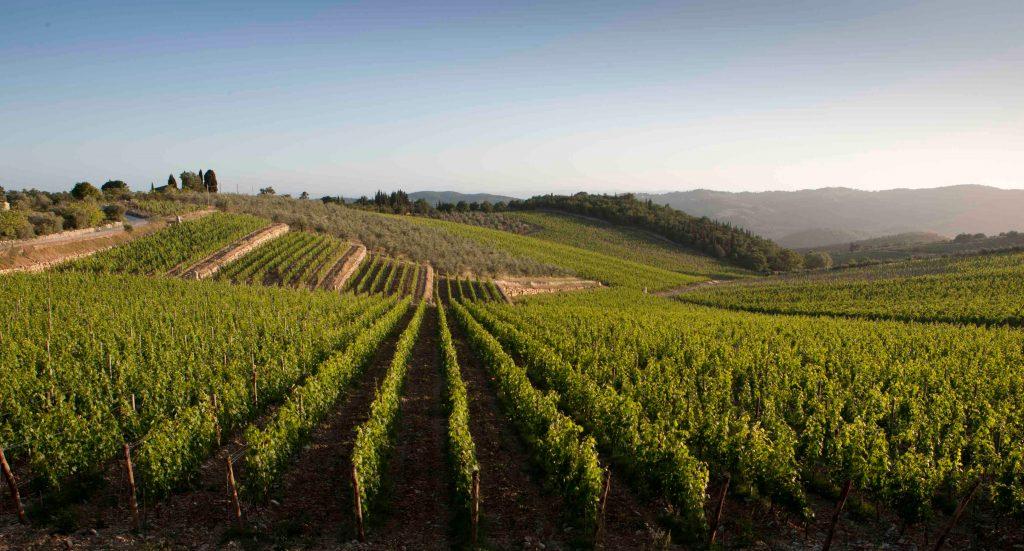 Vino di Toscana<br> CARMIGNANO DOP