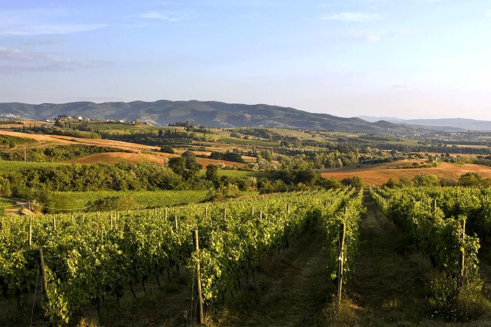 Vino dell'Umbria<br>TORGIANO ROSSO RISERVA DOP