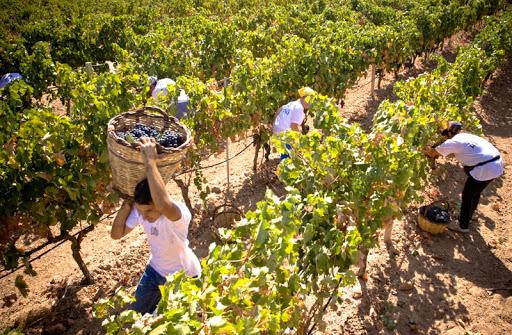 Vini di Calabria<br>SAVUTO DOP