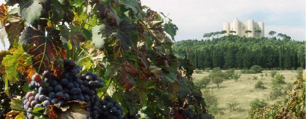 Vini di Puglia<br>CASTEL DEL MONTE ROSSO RISERVA DOP