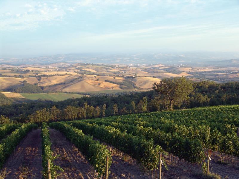 Vino di Toscana<br> MONTECUCCO SANGIOVESE DOP