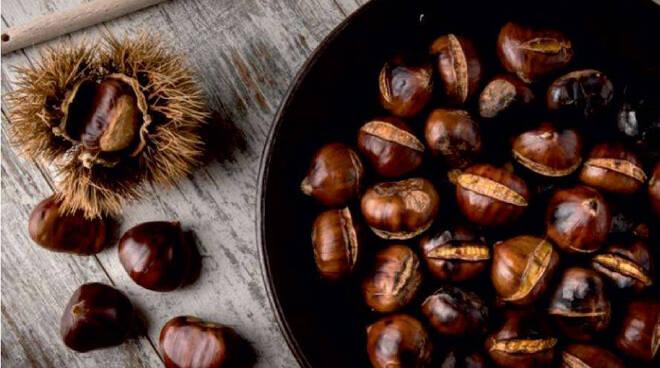 Antiche varietà di castagne piacentine: Domestica di Gusano, dmestiga d'Gusan, e Marrone di Vezzolacca, maron d' Vesulaca PAT