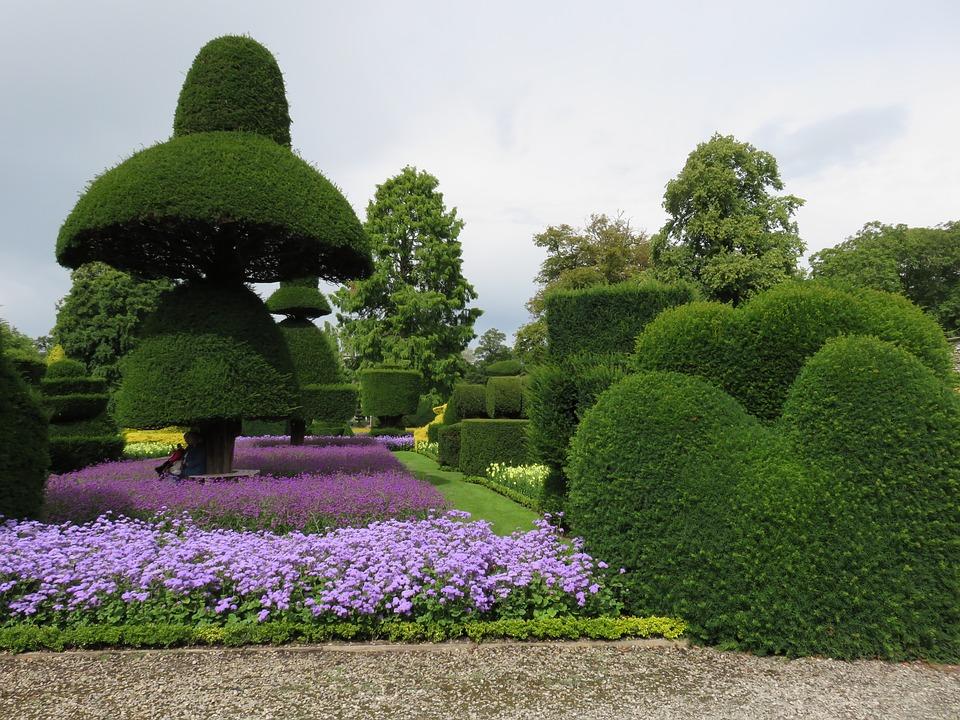 Le 10 piante da siepe ideali per il tuo giardino