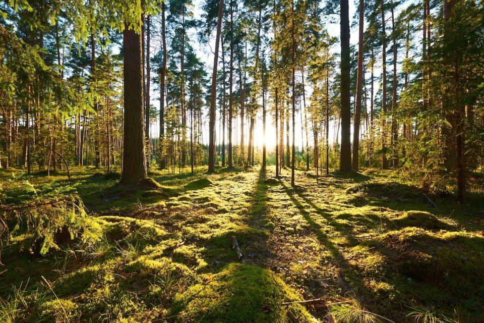 Ambiente: legislazione normativa, competenze e procedure di valutazione