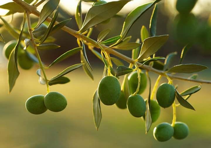 Sicilia<br>MONTE ETNA DOP olio EVO