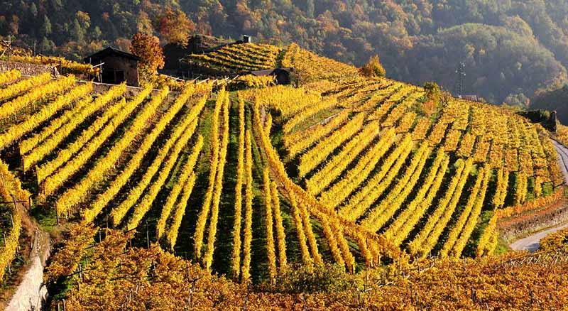 Il paesaggio rurale dei vigneti terrazzati della Valle di Cembra