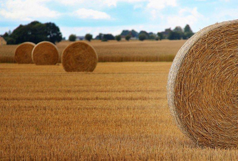 RIORDINO DELLE NORME IN MATERIA DI AGRICOLTURA E DI SVILUPPO RURALE