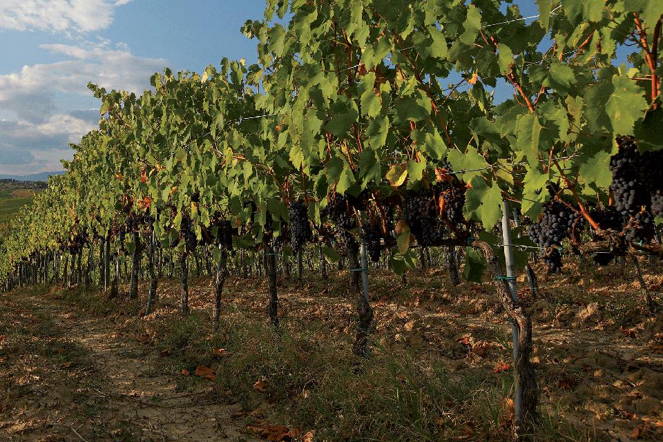 Vini di Calabria<br> COSTA VIOLA IGP