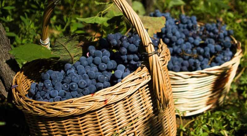 Vini di Calabria<br>ARGHILLÀ IGP