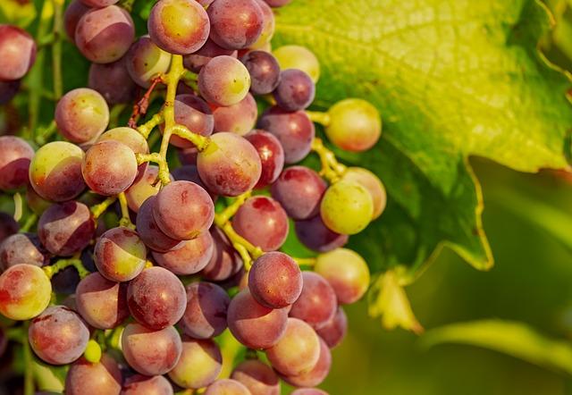 Vini di Calabria<br>BIVONGI DOP