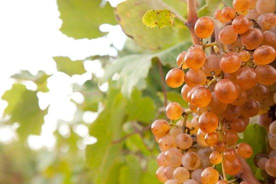 Vini di Calabria<br>CIRÒ DOP