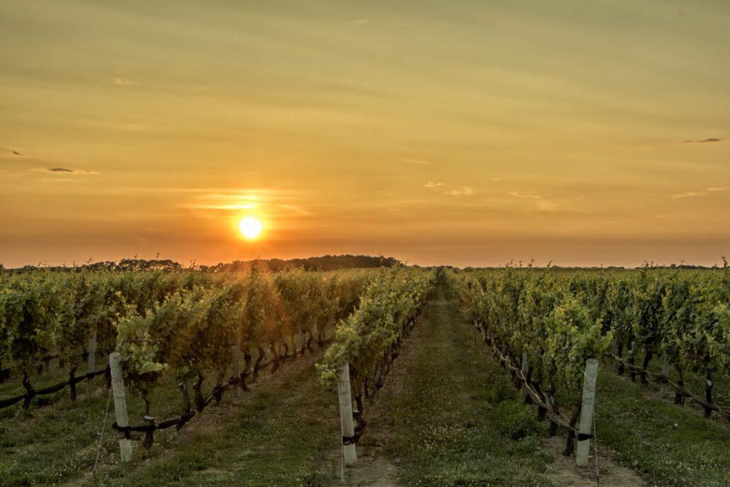 Vini di Calabria<br>MELISSA DOP