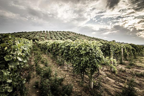 Vini di Calabria<br> VAL DI NETO IGP