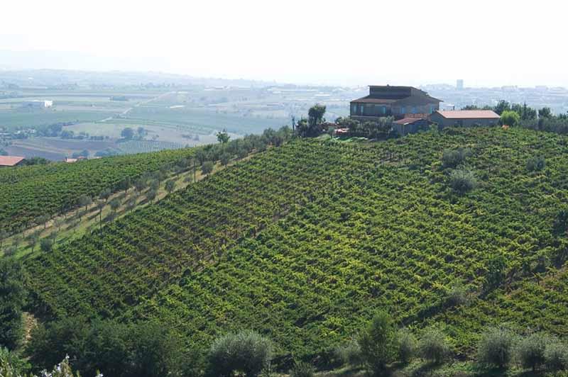 Vini della Campania<br>BENEVENTO, BENEVENTANO IGP