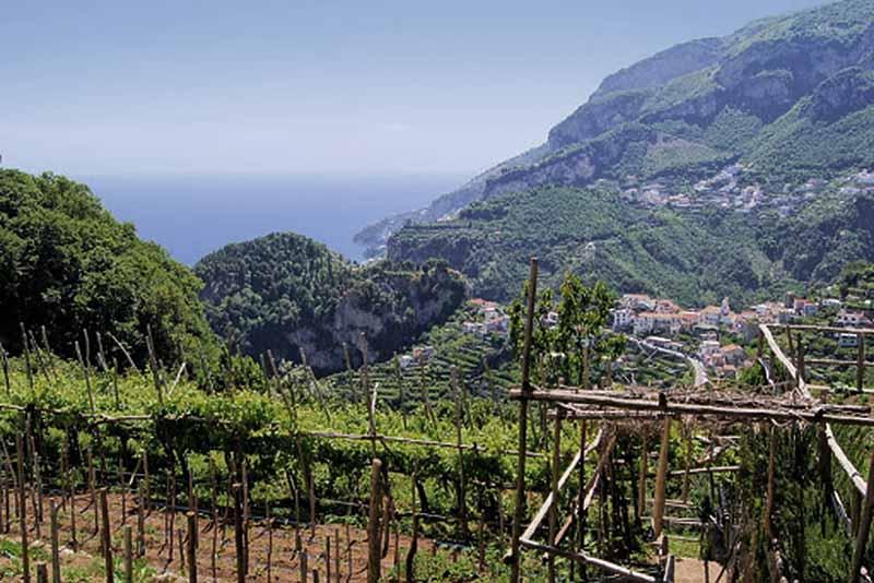 Vini della Campania<br>TERRE DEL VOLTURNO IGP