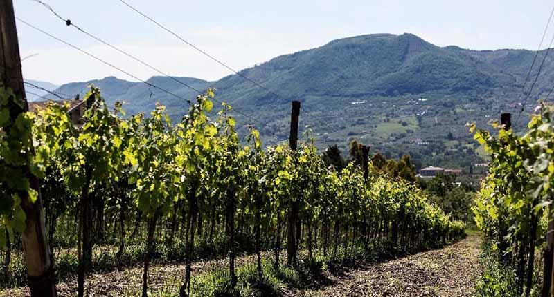 Vini della Campania<br>COLLI DI SALERNO IGP